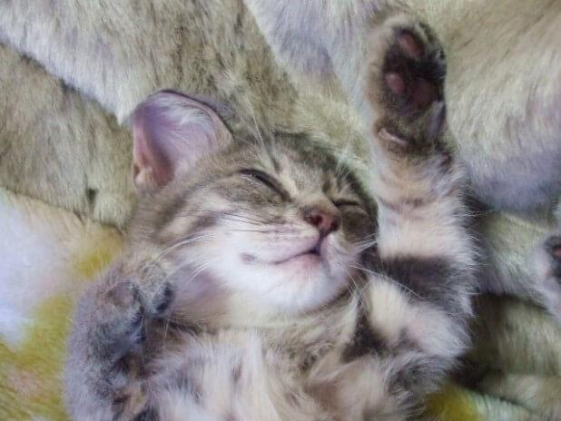 爆睡中の子猫1