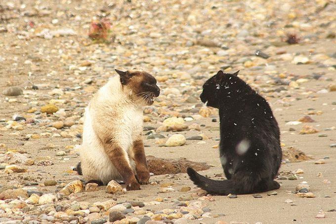 木枯らしふく浜辺で猫の喧嘩