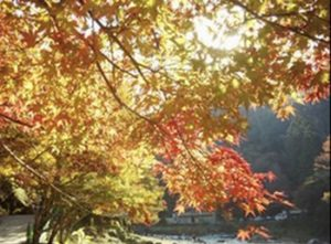 香嵐渓の紅葉3