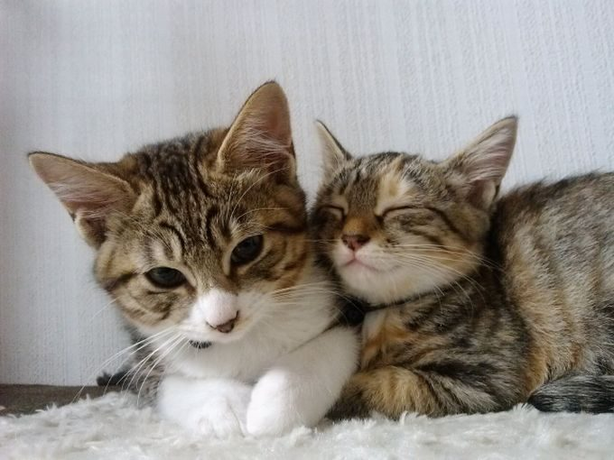 仲良しの仔猫